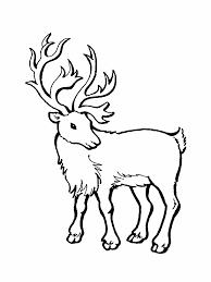 Caribou 15 Animals Printable Coloring Pages