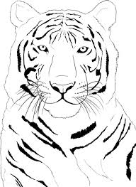 Popular Tiger Coloring Pages Best Coloring Boo #633 - Unknown ...