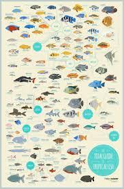 Tropical Aquarium Fish Compatibility 1000 Aquarium Ideas