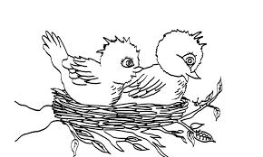 Kleurplaten Kleurplaat Vogel Nestje Kleurplaten Dierenkleurplaten