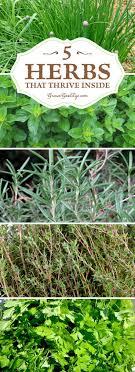 Herb Garden Best 25 Herbs Garden Ideas On Pinterest Growing Herbs Growing
