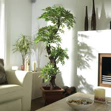 home plants decor artificial tree looks amazing in any stylish large luxury  topiary handmade using real