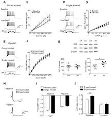 chronic social isolation reduces 5 ht neuronal activity via figure 2
