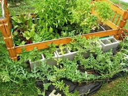 how to plant garden. peppers, swiss chard, watermelon, and various herbs planted in bags of soil how to plant garden