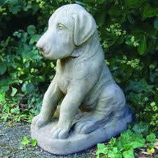 great dane puppy german mastiff