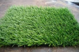 carpet grass. popular carpet grass p