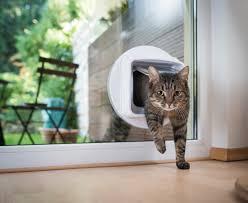 Katzenklappe In Fenster Einbauen Tipps Und Tricks