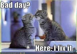 Bad day?? Here these kitties fix it! :-) | Cat Memes | Pinterest ... via Relatably.com