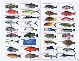 Saltwater Fish Identifier North Carolina Saltwater Fish Id