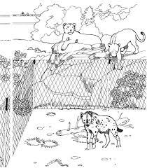 Gevlekte Hyena En Leeuwinnen In De Dierentuin Kleurplaat Gratis