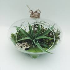 terrarium furniture. full size of hanging green hearth air plant moss glass terrarium kit office desk planter furniture