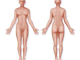 Dermatome Definition With Back Pain Example