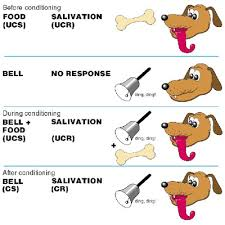 Example Of Classical Conditioning Psychlopedia Classical Conditioning