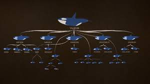 tilikum breeding chart. Plain Breeding My Concern With Utilizing This Chart Is That The Director Isnu0027t  Particularly Clear About Her Concerns Regarding Tilikumu0027s Breeding To Tilikum Breeding Chart Through Aquarium Glass