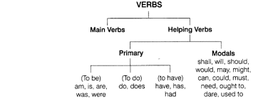 Verb Types Chart Cbse Class 8 English Grammar Verb Cbse Tuts