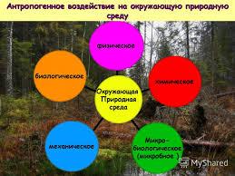 Презентация на тему Влияние загрязнения окружающей природной  5 Окружающая Природная среда физическоехимическое