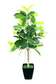 best indoor plants low light tall low light houseplants low light indoor plants surprising tall indoor plants low light about remodel indoor plants low
