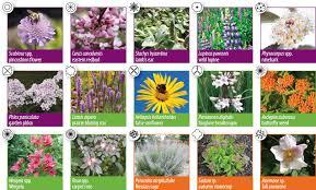 Small Picture Sample garden design sun pollinator garden City of Guelph