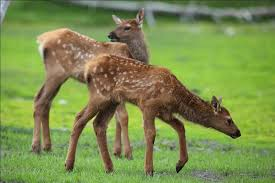 essay on wildlife and its importance paragraph on wildlife articles on wildlife conservation
