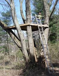 basic tree house pictures. Treefort Time! Basic Tree House Pictures U