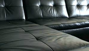 bed bug couch cover bed bugs in sofa bed bugs in leather couch photo 6
