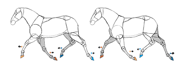 trotting horse drawing.  Trotting Howtodrawhorsesanimationtrot5 With Trotting Horse Drawing