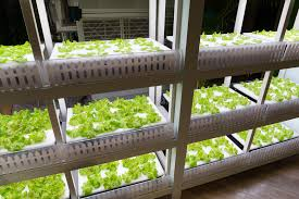 indoor gardening supplies. Getting The Right Indoor Gardening Supplies For A Beautiful Garden
