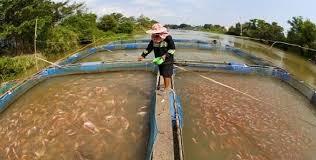 Resultado de imagen para acuicultura