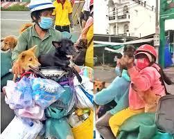 Hình ảnh đàn chó trước khi bị thiêu hủy gây thương nhớ của cặp vợ chồng về  Cà Mau