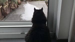 Wohnung Katzensicher Machen Die Besten Tipps Focusde