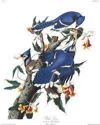 From the may 2021 issue of landscape architecture magazine. Why Audubon Magazine Turned Its Spotlight To John James Audubon Audubon