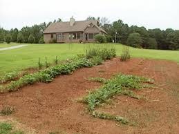 location for a garden
