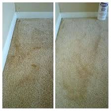Cleaning Carpets With Baking Soda And Vinegar Blitz Blog