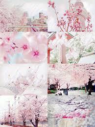 demoniclour Cherry Blossom Aesthetic DEMONICLOUR Pinterest.