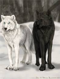 white wolf and black wolf fighting. Brilliant Wolf Black Wolf With White  Google Search Inside White Wolf And Black Fighting E