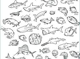 Coloring Pages Baby Animals 5 Coloring Pages Baby Animals 5 Baby Sea