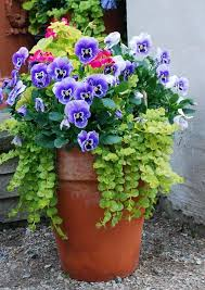 Image result for beautiful flower pots images