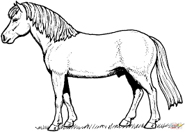 Small Picture Horse coloring page Free Printable Coloring Pages