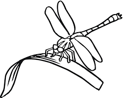 Small Picture Trend Dragonfly Coloring Page 27 On Coloring for Kids with