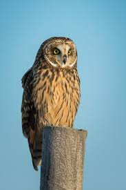 A Field Guide To Common Owl Species Countryside