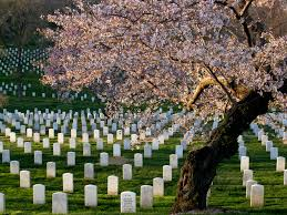 Image result for pictures washington dc memorial arlington national cemetery