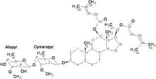isolation of steroidal glycosides