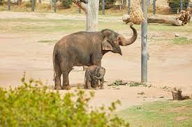 Taronga Western Plains Zoo • Dubbo Region