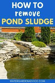 pond maintenance fish pond gardens