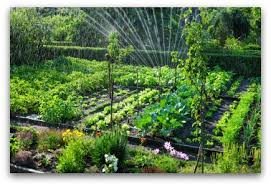 Small Picture Organic Vegetable Garden Planning Tips and Ideas