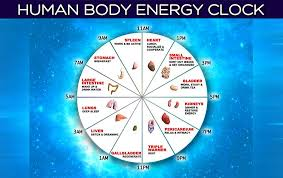 The Human Body Energy Clock Find Out The Optimal Time To Do