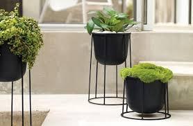 Plant Interior Design Interesting Design Inspiration