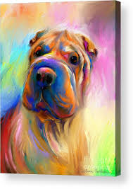 chinese shar pei dog acrylic print featuring the painting colorful shar pei dog portrait painting by