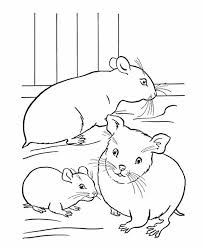 Realistic Hamster Coloring Pages Hamster Coloring Pages Online