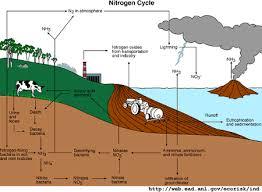Nitrogen Cycle The Environmental Literacy Council